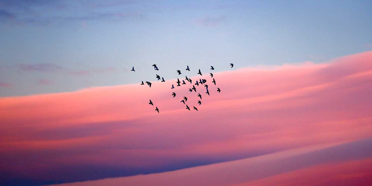 https://www.tildet.com/wp-content/uploads/2020/07/birds-1280x640.jpg