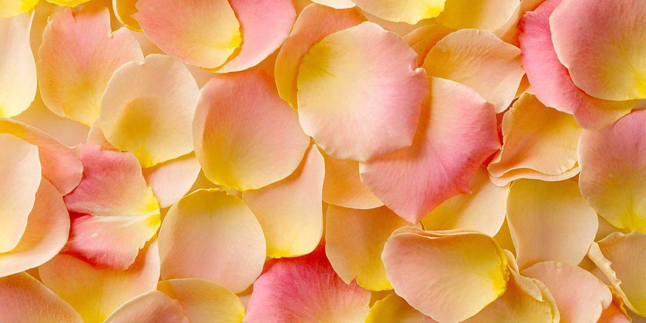 https://www.tildet.com/wp-content/uploads/2020/07/rose-petals-1280x640.jpg