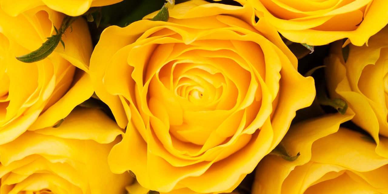 https://www.tildet.com/wp-content/uploads/2020/07/roses-1280x640.jpg